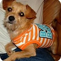 Adopt A Pet :: JoJo - Kingwood, TX