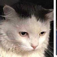 Adopt A Pet :: Haas - Calimesa, CA