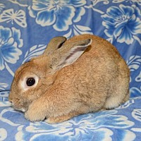Adopt A Pet :: Lucita - Chesterfield, MO