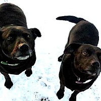 Adopt A Pet :: Patsy - Battle Creek, MI