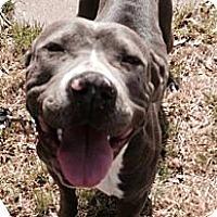 Adopt A Pet :: EMMA - Irving, TX