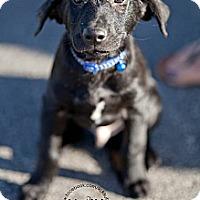 Adopt A Pet :: Ollie - La Crosse, WI