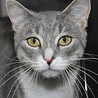 Adopt A Pet :: Benny - South Saint Paul, MN