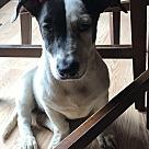 Adopt A Pet :: Lela