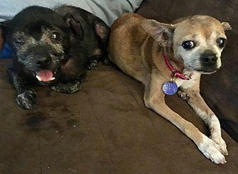 Adopt A Pet :: We pay the Vet Bills  - Ft Myers Beach, FL