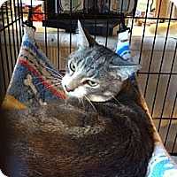 Adopt A Pet :: Louie - Dale City, VA