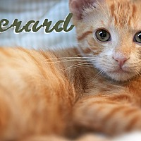 Adopt A Pet :: Gerard - Los Angeles, CA