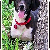 Adopt A Pet :: JJ - Starkville, MS