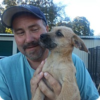 Adopt A Pet :: Ivy - La Crosse, WI