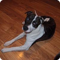 Adopt A Pet :: Jackson - Madison, WI