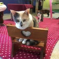 Adopt A Pet :: Jill - Brooksville, FL