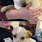 Adopt A Pet :: Sweet 7 Cheech