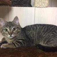 Adopt A Pet :: Rudy - Ellicott City, MD