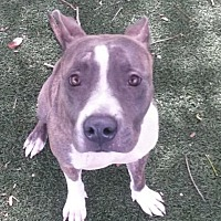 Adopt A Pet :: Lola - Fort Myers, FL