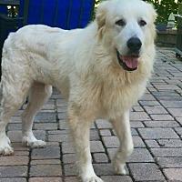 Adopt A Pet :: KK - Waldorf, MD