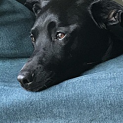 Puppies for Sale in Waterloo Iowa - Adoptapet com