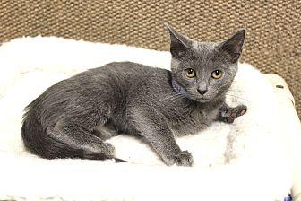 Adopt A Pet :: SomethingRoyal  - Germantown, TN