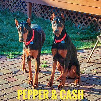 Adopt A Pet :: Cash  - Albuquerque, NM