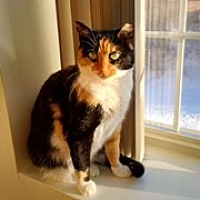 Adopt A Pet :: Tabitha - Long Beach, NY