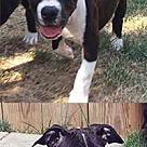Adopt A Pet :: Buddie's Hannah