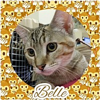 Adopt A Pet :: Belle - Kennedale, TX
