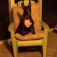 Adopt A Pet :: Baloo - Columbia, SC