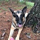 Adopt A Pet :: Magic 3716