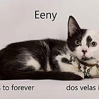 Adopt A Pet :: Eeny - Arcadia, CA