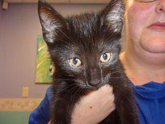 Adopt A Pet :: Sam  - Princeton, WV