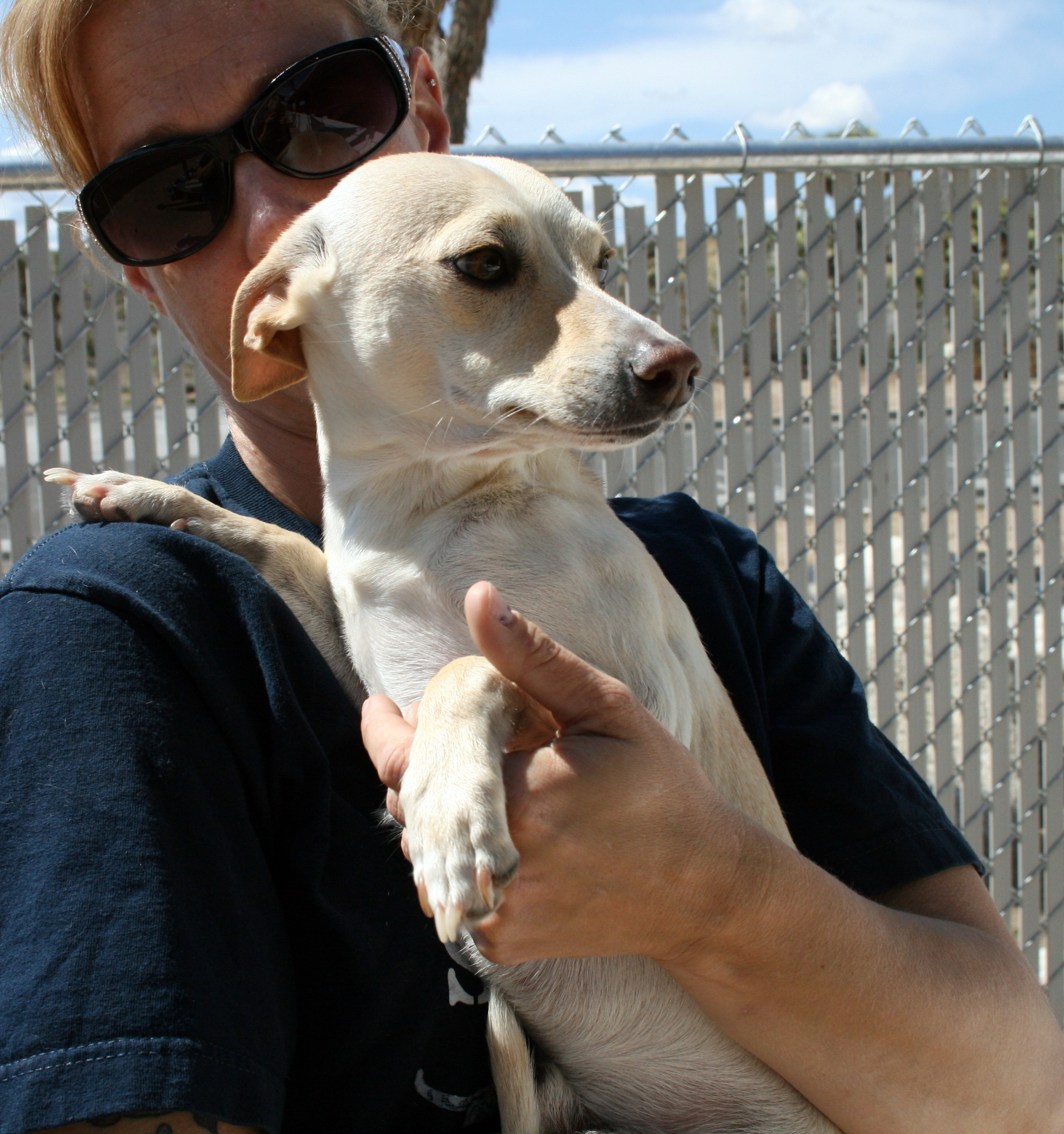 Husky puppies for sale yucca valley - Yucca Valley Ca Dachshund Meet Dobby Comet Granger A Dog For Adoption