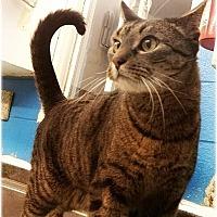 Adopt A Pet :: Mark - Huntington, NY