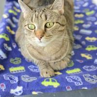 Adopt A Pet :: Daphne - New Freedom, PA