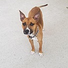 Adopt A Pet :: Scooby