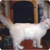 Adopt A Pet :: Tommy - Riverside, CA