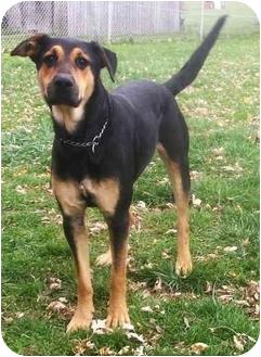 Latrobe Pa German Shepherd Dog Meet Isiah A Pet For Adoption
