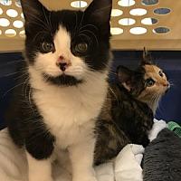 Adopt A Pet :: Bo - Hudson, NY