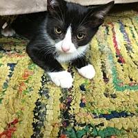 "Adopt A Pet :: Chava aka ""Cha Cha"" - Deerfield Beach, FL"