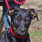 Adopt A Pet :: Colt B Good with kids