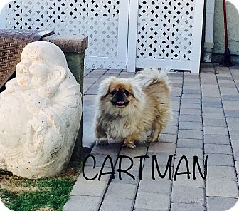 Pekingese Dog for adoption in SO CALIF, California - CARTMAN
