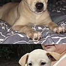 Adopt A Pet :: Kiara