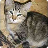Adopt A Pet :: Groucho Marx - Strathmore, AB