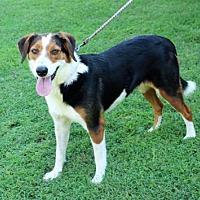 Adopt A Pet :: WHITLEY - Andover, CT