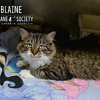Adopt A Pet :: BLAINE - Johnstown, PA