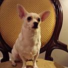 Adopt A Pet :: Salty