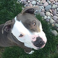 Adopt A Pet :: Luna - Tacoma, WA