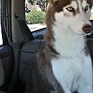 Adopt A Pet :: Katie - ADOPTION PENDING - CONGRATS JOSEPH FAMILY!