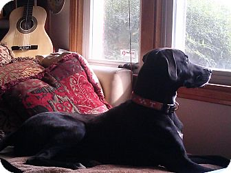 Labrador Retriever Mix Dog for adoption in Plainfield, Connecticut - Rocky