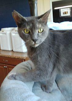 Adopt A Pet :: Fidella  - Wilmington, OH
