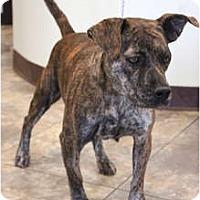 Adopt A Pet :: Ever - miami beach, FL