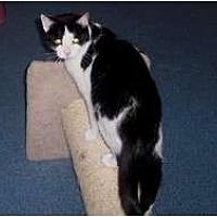 Adopt A Pet :: Bailey - Quincy, MA